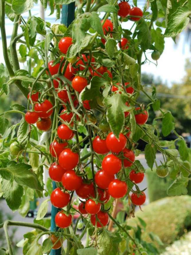 comment-faire-jardin-potager-balcon-tomates-cerises