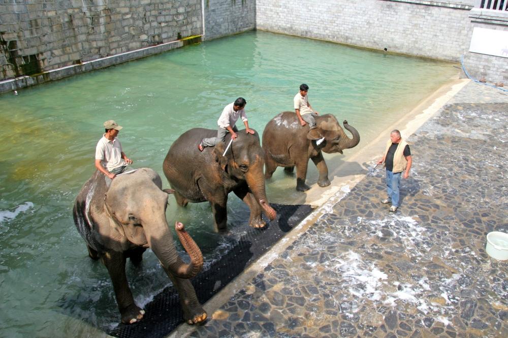 bain des éléphants.jpg