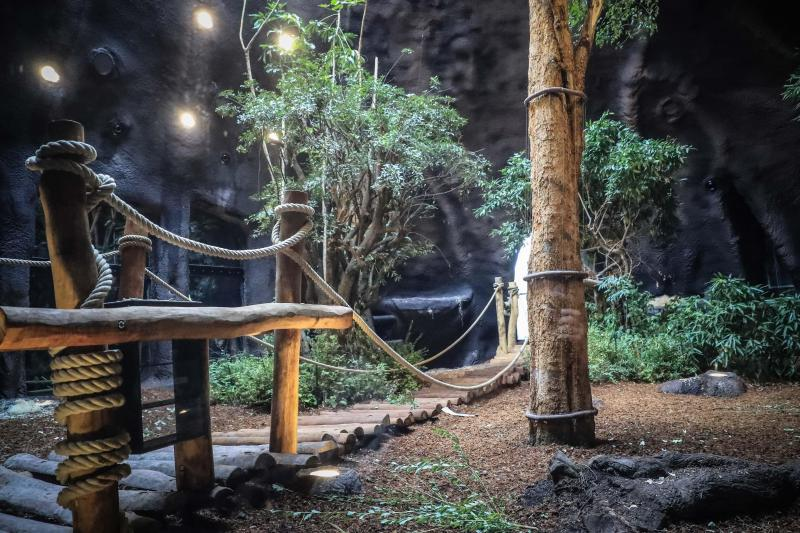 enclos gorilles